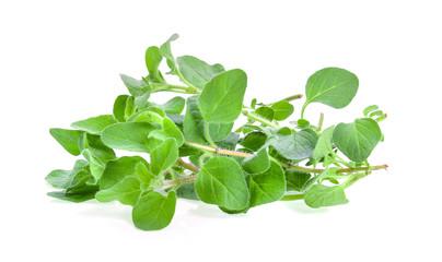 fresh oregano herb on white background