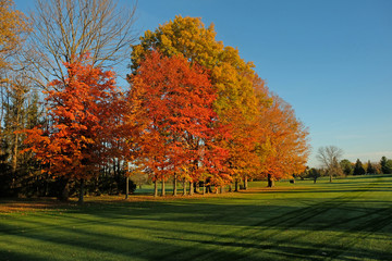 Row of trees displaying fall colors