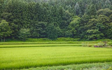 山村の水田