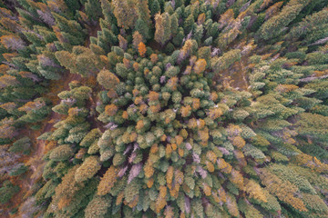 Fall Forest Topdown Drone Arial Shot   Oregon