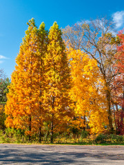 Colors of the fall foliage