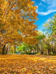 Colors of the fall foliage