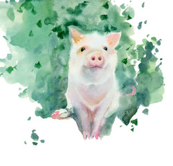 Watercolor painting. Sketch of little pig.