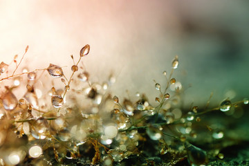 Rosa krople na trawie i zamazanym bokeh tle