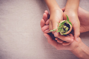 adult and child hands holding seedling plants in eggshells, eco gardening,  montessori education , CSR  Corperate social responsibility concept, zero waste plastic free sustainable living