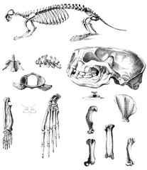 The bones of the skull of the animal.