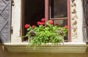 Geranium on window sill of a ancient house