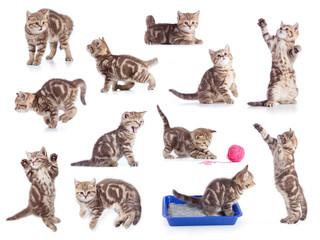 Papier Peint - Cats isolated set