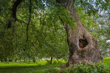 Hollow in the Tree