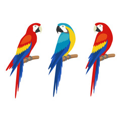 Parrot set. Isolated on white background. Vector illustration
