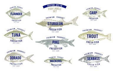 Hand drawn illustrations of fish with names in retro style over white background. Vector logo templates. Labels can be use for restaurant menu fish shop market.