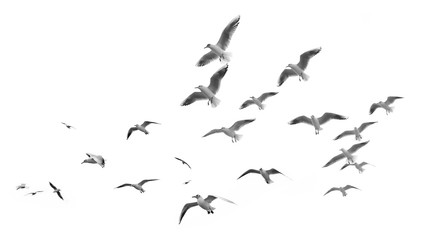 Flying seagulls (isolated) Wall mural