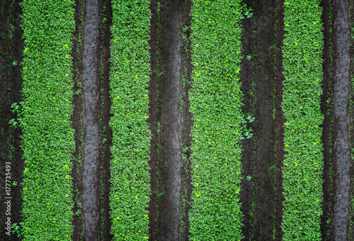 Row Of Growing And Planting Vegetables Green Vegetable Garden Top View