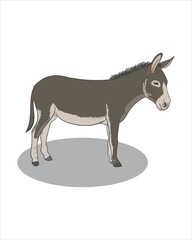 Adult grey Donkey - vector drawing - isolate white background