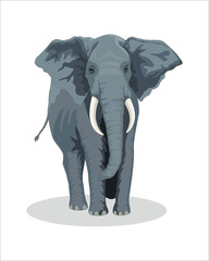 Big and adult Elephant-vector drawing-isolated white background