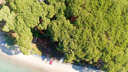 Overhead view of pinewood in front of ocean