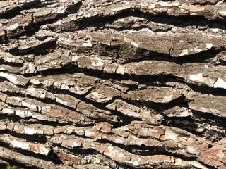 écorces de pin provençal