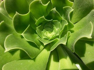 fond végétal