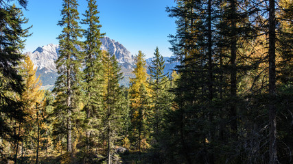 Dolomites. Wonder in the larch forest. Autumn...