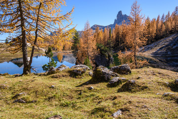 Reflections. High mountain larch in autumn dress. Lake Federa, Dolomites