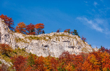 forest in red foliage on a rocky cliff. beautiful nature scenery on fine autumn day in Mountains