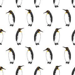 vector seamless pattern of penguin on white background. Illustration of bird Emperor penguins