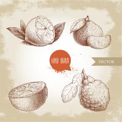 Hand drawn sketch style citrus fruits set. Lemon half, lime, tangerine, mandarine, orange slice and bergamot with leaf. Vector organic food illustrations.