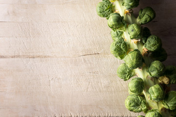 Brussel sprouts on stalk background