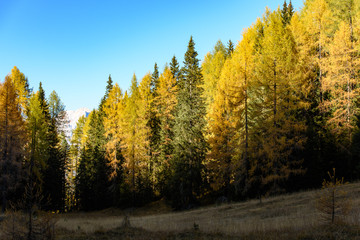 Golden larch reflections. Autumn Dolomites