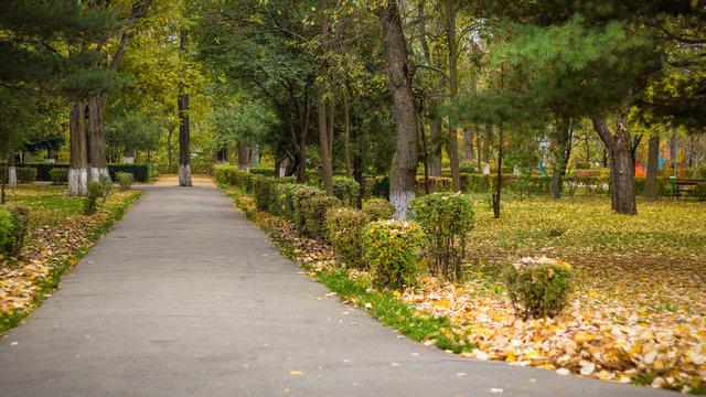 Autumn in Onesti