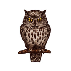 Owl bird vector isolated sketch icon