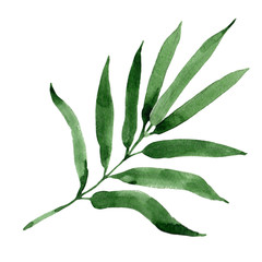 Tropical leaves bamboo tree in a watercolor style isolated. Aquarelle wild leaves for background, texture, wrapper pattern, frame or border.