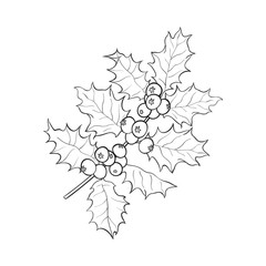 Mistletoe black and white branch, twig with leaves and berries, Christmas decoration element, sketch vector illustration on white background.