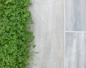 carrelage de terrasse, et trèfle dans la pelouse, aménagement du jardin