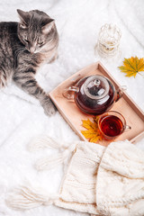 Cute kitten relaxing on warm sweater by autumn rustic home decor. Lazy cat resting on soft pullover, cup of tea near it. November morning concept scene
