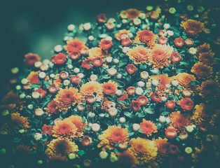 Vintage flower background. Blossoming flowers in a garden