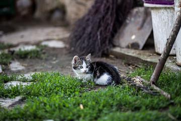 Beautiful little kitten outdoor