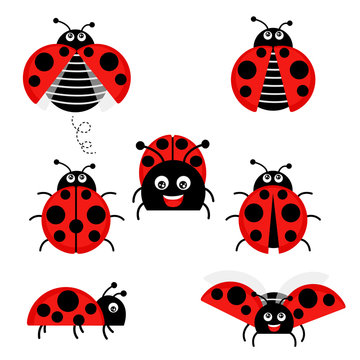 Cartoon ladybug vector set isolated from the background. Cute ladybug on a leaf or flying in a flat style. Symbols funny insects and beetles.
