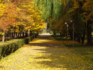 Golden autumn alley