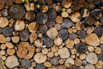 A stack of spilled log in a section of birch, ash, oak, background of round spilled wood