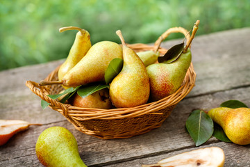 Picked pears in wicker basket