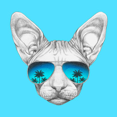 Portrait of Sphynx Cat with mirrored sunglasses, hand-drawn illustration