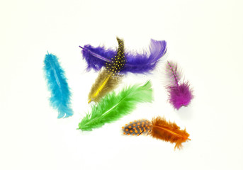 six bright multicolored bird feathers on a white background..