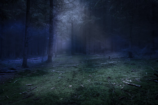 Dark forest and green den with mist and moonlight