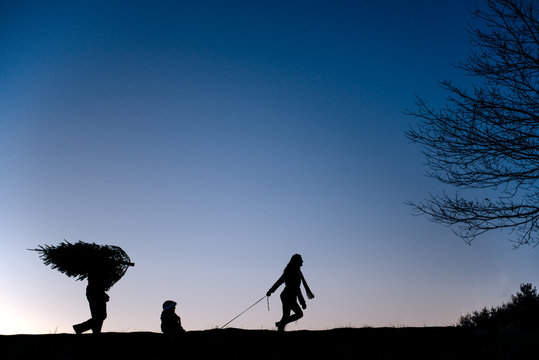 Family walks across a field at sunset with their freshly cut Christmas tree