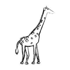 safari animals design