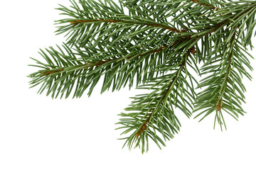 Fir tree branch. Pine branch. Christmas background.