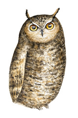Cute Brown Great Horned Owl (Bubo Virginianus) with big round yellow eyes watercolor portrait illustration. Isolated on white background. Card, t-shirt, poster, wallpaper, children's room decoration.