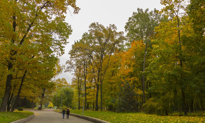 Beautiful autumn forest with yellow trees in park