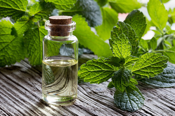 A bottle of melissa essential oil with fresh melissa twigs